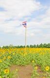 在向日葵领域的泰国旗子 库存照片