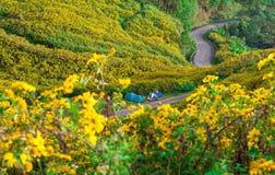 在向日葵领域的路在11月每年在土井Mae 免版税图库摄影