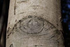 在吠声的眼状的结构 库存照片