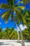 在含沙加勒比海滩的高鲜亮的棕榈 库存图片