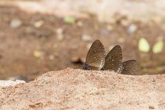 在含沙土壤的一只俏丽的蝴蝶 库存图片