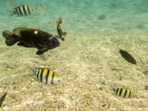 在含沙海底的鱼 库存照片