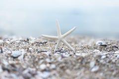在含沙summerbeach的海星与 库存照片