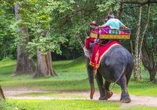 在吴哥窟的大象乘驾在柬埔寨 库存图片