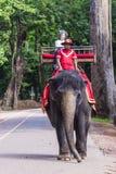 在吴哥窟的大象乘驾在柬埔寨 免版税图库摄影