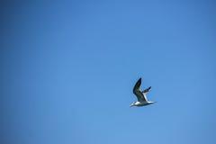 在和平的偏僻的鸟飞行 免版税库存照片