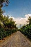 在咖啡农场的石路在危地马拉 库存照片