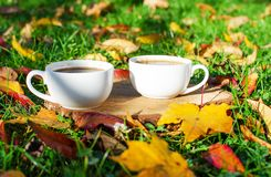 在咖啡罐附近的秋叶 库存图片