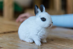在咖啡馆的兔子 免版税图库摄影