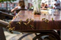 在咖啡馆的黄蜂 库存图片