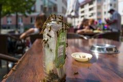 在咖啡馆的黄蜂 免版税库存图片