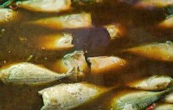 在咸汤的被炖的鲭鱼鱼,泰国的盘 免版税图库摄影