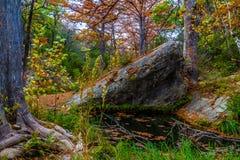 在哈密尔顿小河的塞浦路斯结构树 免版税图库摄影