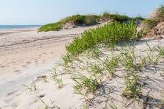 在哈特拉斯角国民海滨的Coquina海滩 库存照片