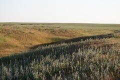 在哈萨克斯坦干草原的日落  免版税库存照片