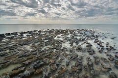 在哈默尔恩水池海洋自然保护的Stromatolites Gascoyne地区 澳大利亚西部 免版税图库摄影