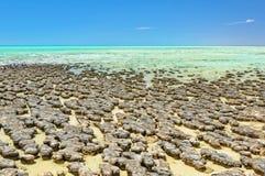 在哈默尔恩水池-德纳姆的Stromatolites 库存照片