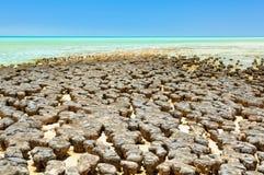 在哈默尔恩水池-德纳姆的Stromatolites 免版税库存图片