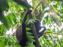 在哥斯达黎加附近的看法 库存图片
