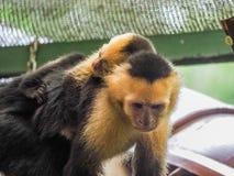 在哥斯达黎加附近的面无血色的连斗帽女大衣和婴孩视图 库存照片