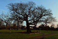 在哥特式公墓的老树 库存图片