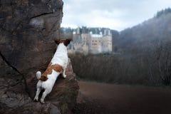 在哥特式城堡的狗 一条小狗在一个神秘的地方 库存照片