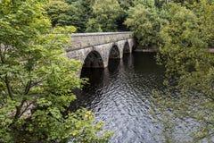 在哺养Anglezarke水库的桥梁附近的嫩绿的叶子, 免版税库存照片