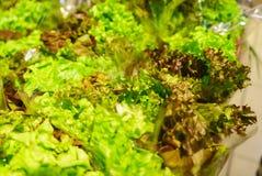 在商店架子的绿色莴荬菜莴苣 库存照片