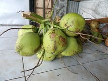 在商店3的绿色椰子 库存照片