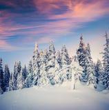 在喀尔巴阡山脉的意想不到的冬天日出与雪盖 免版税库存图片
