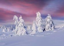 在喀尔巴阡山脉的意想不到的冬天日出与雪蜷缩 图库摄影