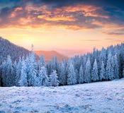 在喀尔巴阡山脉的美丽如画的冬天日落与树和 免版税库存照片