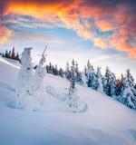 在喀尔巴阡山脉的美好的冬天日出与雪盖 库存图片
