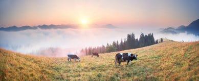 在喀尔巴阡山脉的上面的早晨 图库摄影