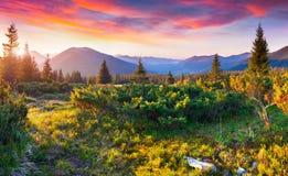 在喀尔巴阡山脉的剧烈的夏天日落 免版税库存图片