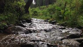 在喀尔巴阡山脉的山小河 股票视频