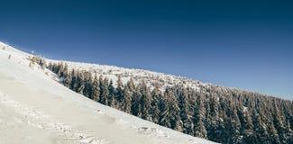 在喀尔巴阡山脉的早晨 免版税库存照片