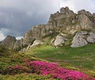 在喀尔巴阡山脉的狂放的高山花 库存图片