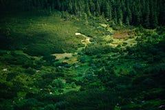 在喀尔巴阡山脉的美好的风景,乌克兰 免版税库存图片