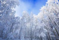 在喀尔巴阡山脉的Wwinter风景在Pezinok,斯洛伐克附近 免版税库存照片