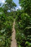 在喀麦隆的雨林的狭窄的道路 免版税图库摄影