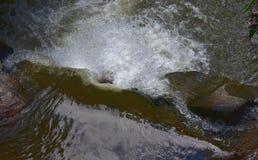 在喀麦隆高地的Parit瀑布 库存图片