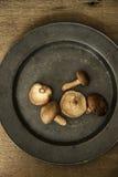 在喜怒无常的自然光设置的新鲜的什塔克菇与vin 免版税库存照片