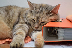 在喜爱的地方的猫 库存图片