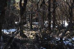 在喜马拉雅山森林里 库存照片