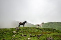 在喜马拉雅山释放 免版税库存图片