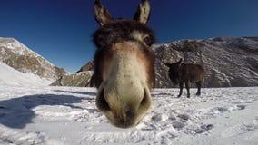 驴在喜马拉雅山 股票录像