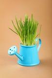 在喷壶的春天绿草在褐色 库存照片