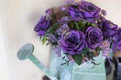 在喷壶的甜紫色玫瑰 免版税库存图片