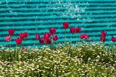 在喷泉前面的春天郁金香 免版税库存照片